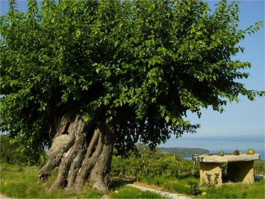 drevo-milje